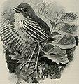 Bird-lore (1914) (14568659280).jpg