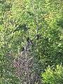 Birds in the trees (6170286965).jpg
