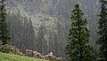 Biskeri- Snowfall I IMG 7227.jpg
