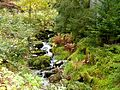 Black Forest- brook (10561899055).jpg