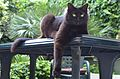 Black cat on the terrace table.jpg
