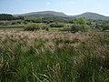 Blaenau Dolwyddelan, rough grazing - marshland - geograph.org.uk - 1334692.jpg