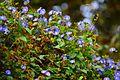 Blue Flowers by Saivishal.jpg