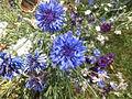 Blue flowers (8981737416).jpg