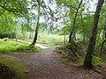Boardwalk in Bystock nature reserve - geograph.org.uk - 2501994.jpg