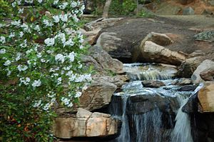 The Bog Garden - Photo of the waterfall installed at the Bog Garden in 2005