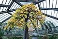 Bonsai Tree at Arnold Arboretum.jpg