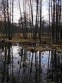 Borecké rybníky - 1 - panoramio.jpg