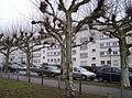 Bornheimer Hang Siedlung Wittelsbacher Allee 31122009 2.JPG