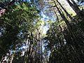 Bosque Argentina.jpg