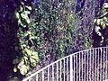 Bosque do hotel (4869971475).jpg