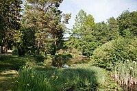 Botanischer Garten Rostock Teich.jpg