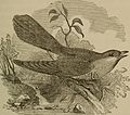 Boys and birds; or, Miss Truat's mission (1874) (14749399372).jpg