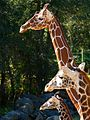 Brevard Zoo, Viera FL - Flickr - Rusty Clark (82).jpg