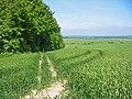 Bridleway in wheat field Pentridge Dorset - geograph.org.uk - 183060.jpg