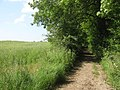 Bridleway leading to Badlesmere - geograph.org.uk - 1369855.jpg