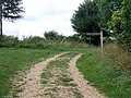 Bridleway near Cowgrove - geograph.org.uk - 1471115.jpg