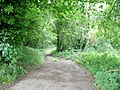 Bridleway to English Bicknor - geograph.org.uk - 1427666.jpg