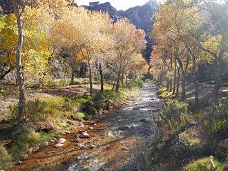 Bright Angel Creek - Bright Angel Creek