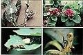 British journal of entomology and natural history (1992) (19795565984).jpg