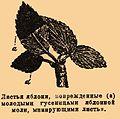 Brockhaus-Efron Hyponomeuta malinella 1.jpg