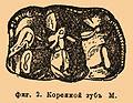 Brockhaus and Efron Encyclopedic Dictionary b36 774-2.jpg