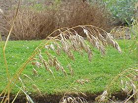 affûtage faux a herbe