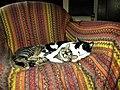 Bucuresti, Romania. Pisocii mei aproape cufundati in somn.jpg