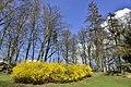 Buissons vert clair (26368152386).jpg