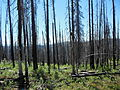 Burnt forest, Tiffany Mtn, Okanogan NF.JPG