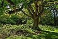 Burton Bushes IMG 1513.jpg - panoramio.jpg