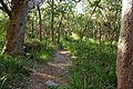 Bushland, Royal National Park, The Coast Walk-Australia.jpg