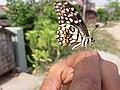Butterfly20171025 124106.jpg