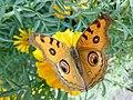 Butterfly - 2.jpeg