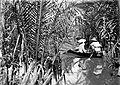 COLLECTIE TROPENMUSEUM Dr. Hochreutiner in zijn boot tussen de Nipa fructicans TMnr 10006117.jpg