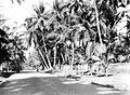 COLLECTIE TROPENMUSEUM Weg over het eiland Bali TMnr 10007761.jpg