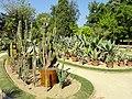 Cactus collection - Jardin Botanique de Lyon - DSC05318.jpg
