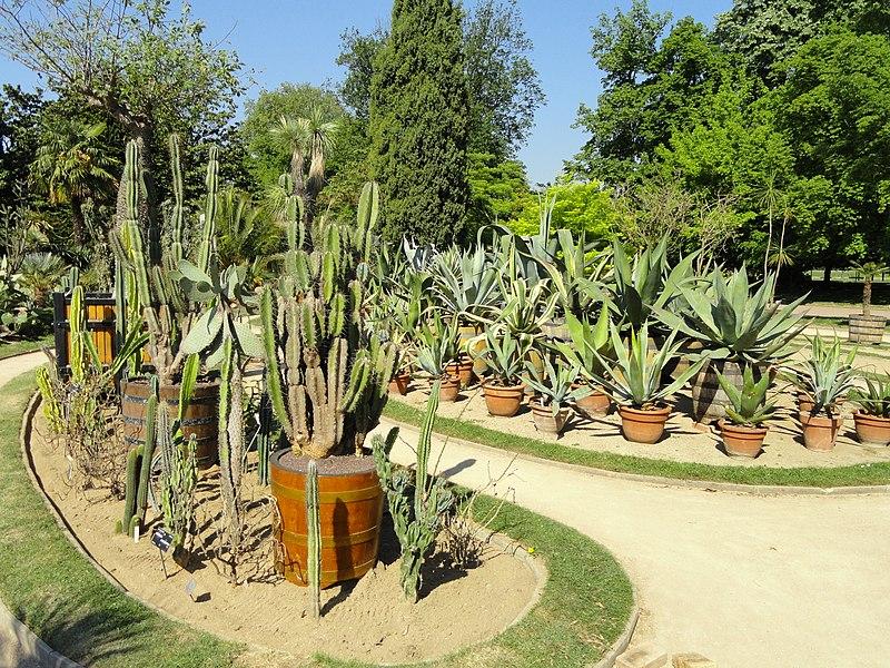 File cactus collection jardin botanique de lyon for Jardin botanique lyon