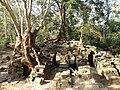 Cambodge-1006.jpg