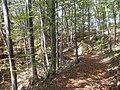 Camminado nel bosco M. Lefre.jpg