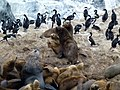 Canal de Beagle Ushuaia Argentina - panoramio (10).jpg