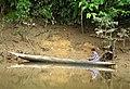 Canoe on Ketu River (48807637623).jpg