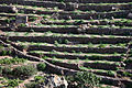 Cappereto a terrazze (Pantelleria).jpg