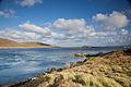 Carcass Island (15907218060).jpg