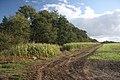 Carr Plantation - geograph.org.uk - 1017727.jpg