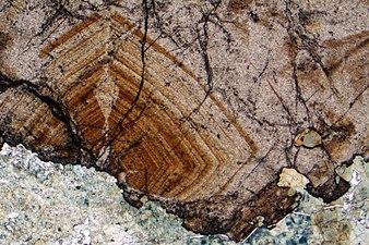Cassiterite crystal.jpg