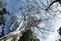 Cat Tien Park, Vietnam, Tree canopy over blue sky.jpg