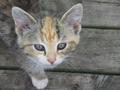 Cat deck.PNG