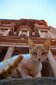 Cat in petra.jpg