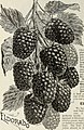 Catalogue of fruit and ornamental trees, small fruits, roses, etc. (1896) (19923960743).jpg